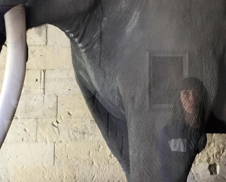 Fritz l'Elephant