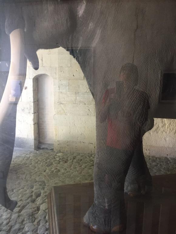 Fritz_Elephant_Tours_VS_Guillaume_Gwardeath