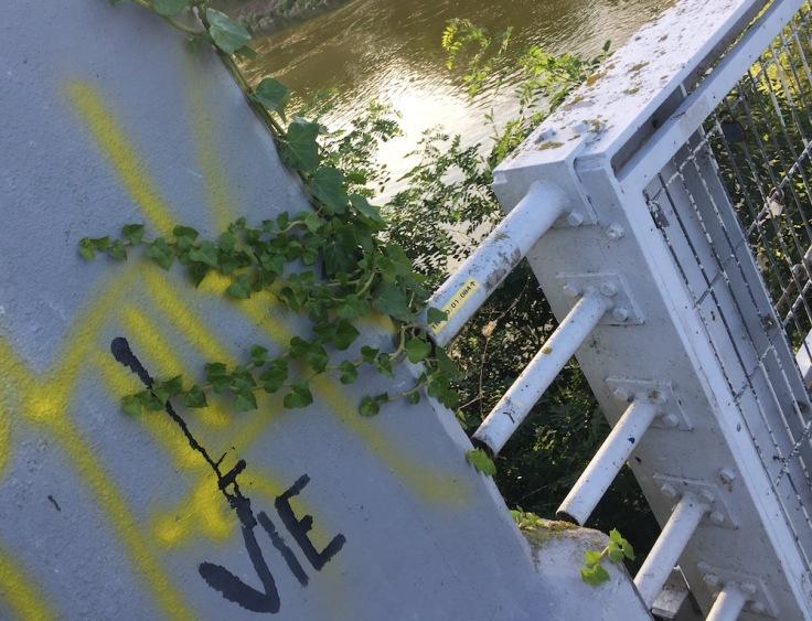 Pureté de la vie sur la Loire